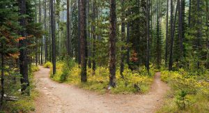 forest_path_stock_image